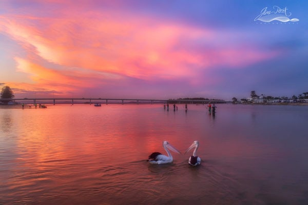 Pelicans Enjoying The Sunset At The Entrance Channel